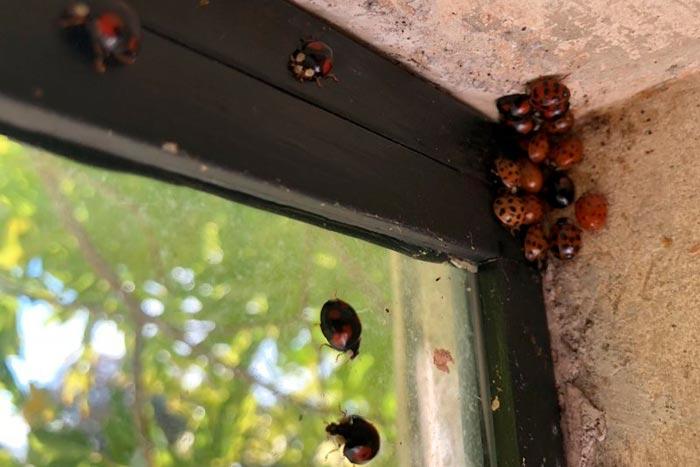 насекомые на окне
