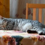 кот спит на столе