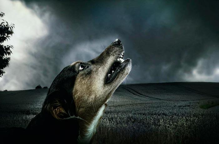 собака воет