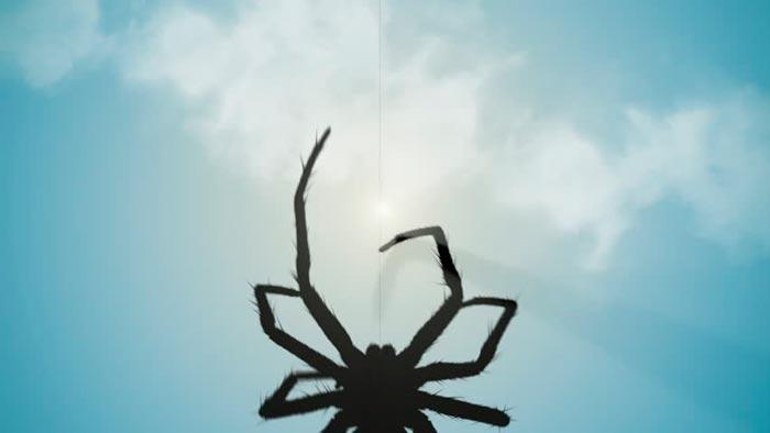 паук ползет вверх