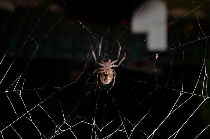 паук ползет по паутине