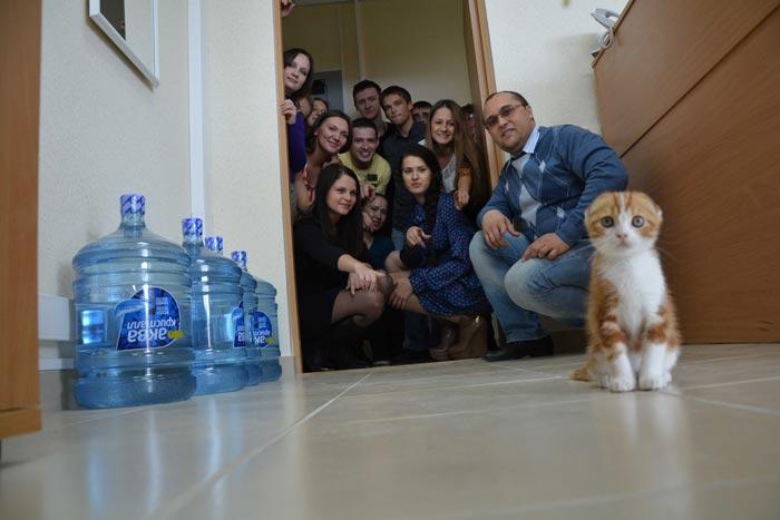 кошка в новый дом