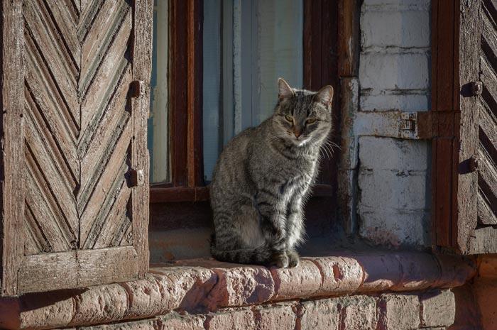 серый кот у порога