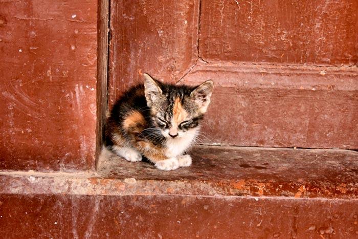 котенок у порога