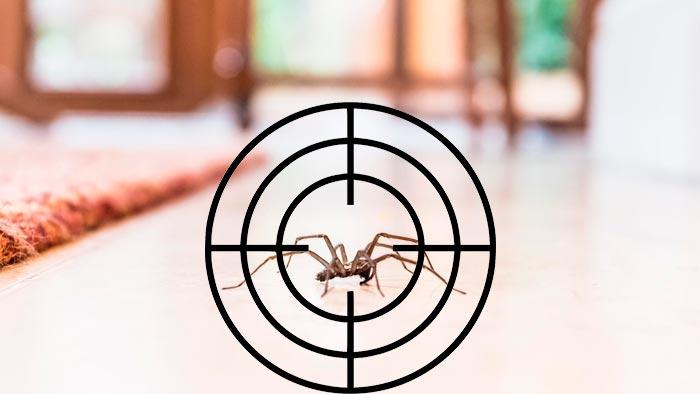 паук под прицелом