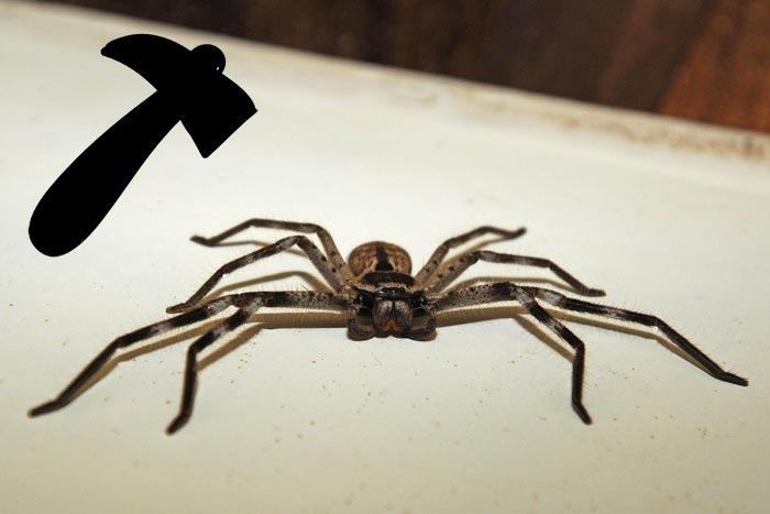 паук и молоток