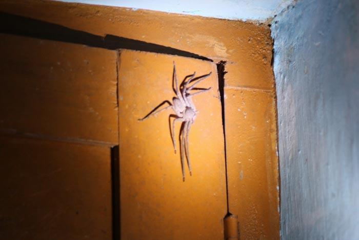 паук в углу комнаты
