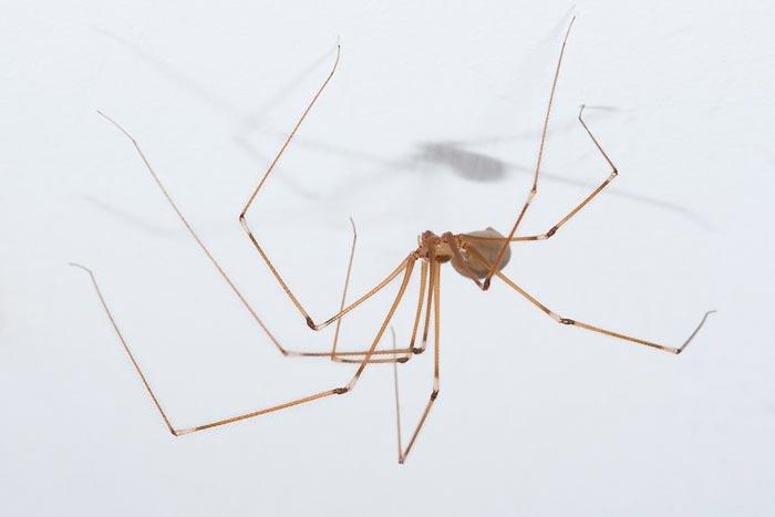 паук на потолке