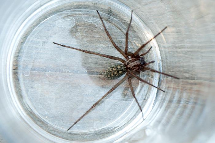 паук в чашке