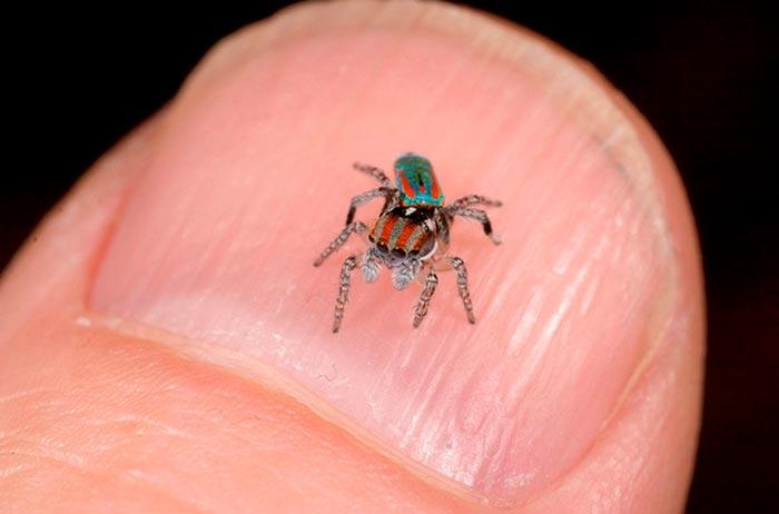 мелкий паук