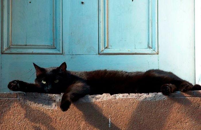 черный кот у порога