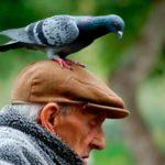 голубь сел на голову