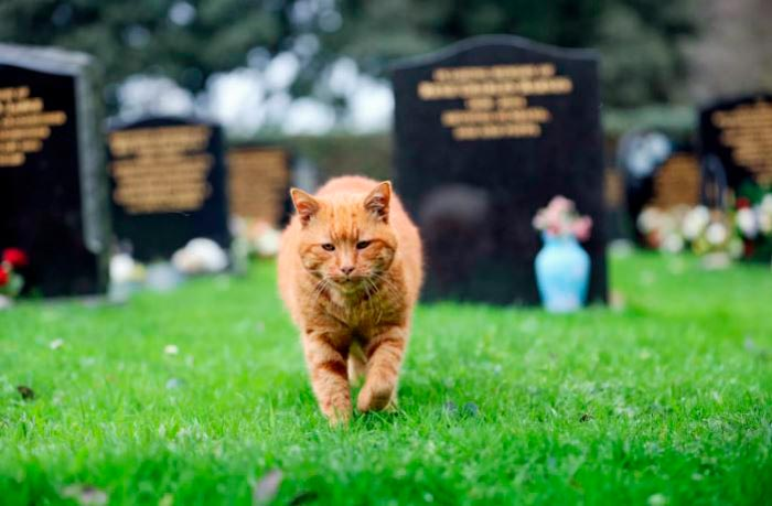 кот идет по кладбищу