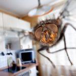 муха в доме