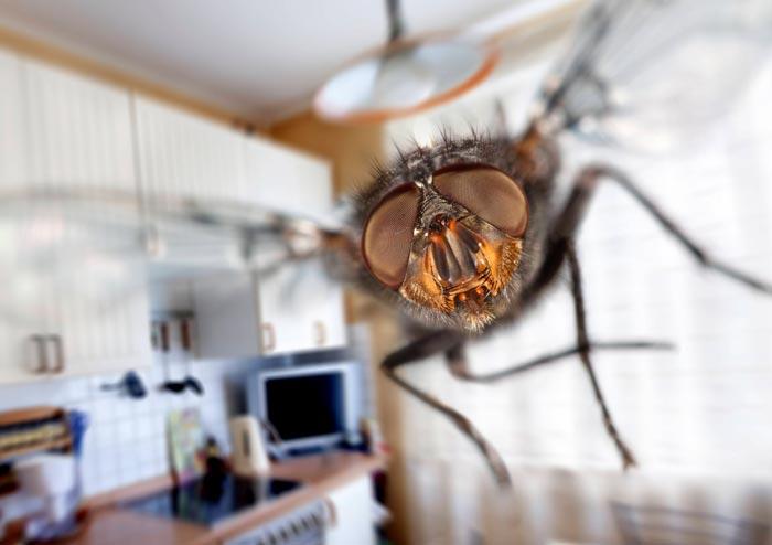 Появление мух в квартире приметы