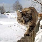 кот уходит