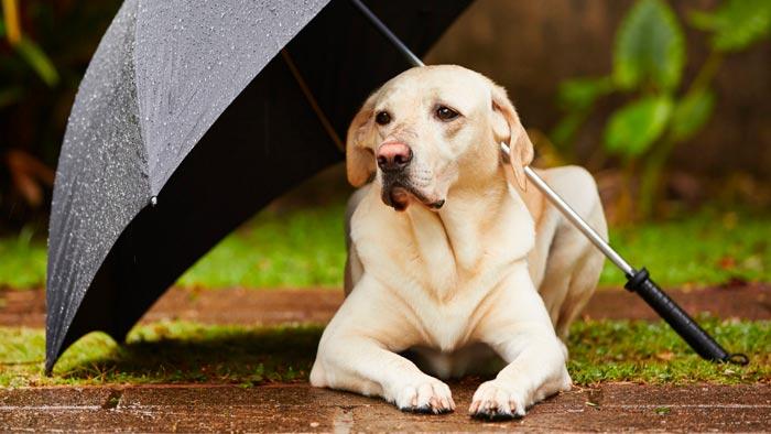 собака с зонтиком