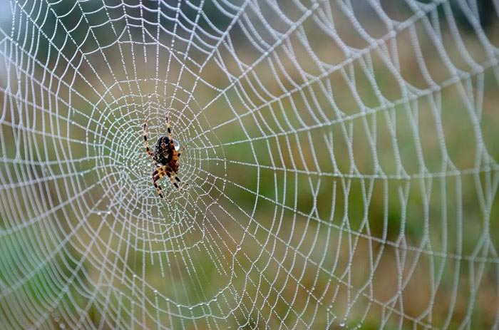 паук в паутине