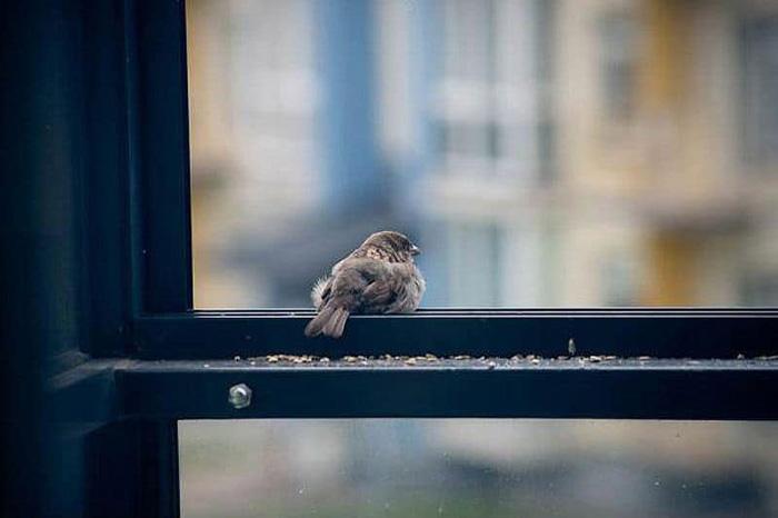воробей на окне