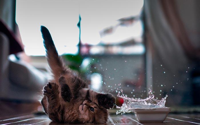 котенок пролил воду