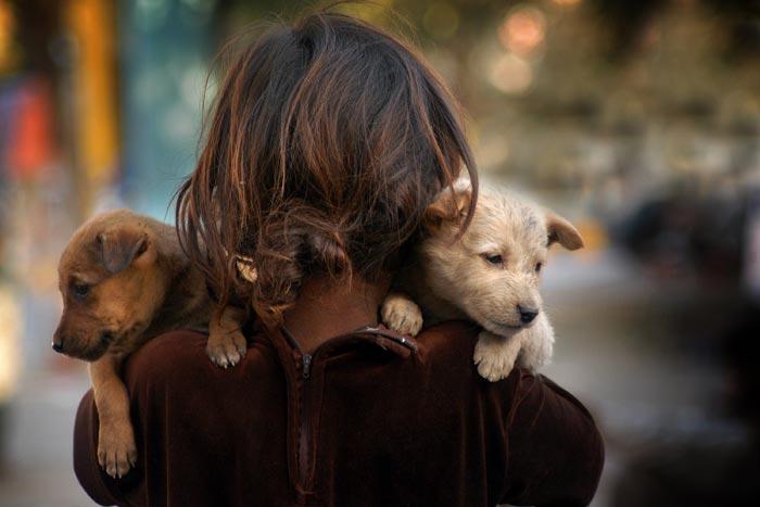 бездомные щенки на руках