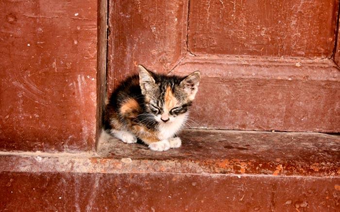 кошка у порога
