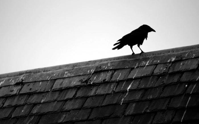 ворона на крыше