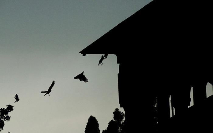 вороны кружат над домом