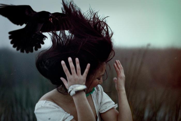 ворона над головой