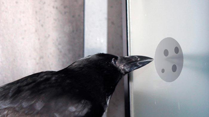 ворона стучит в окно