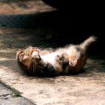 котенок под машиной