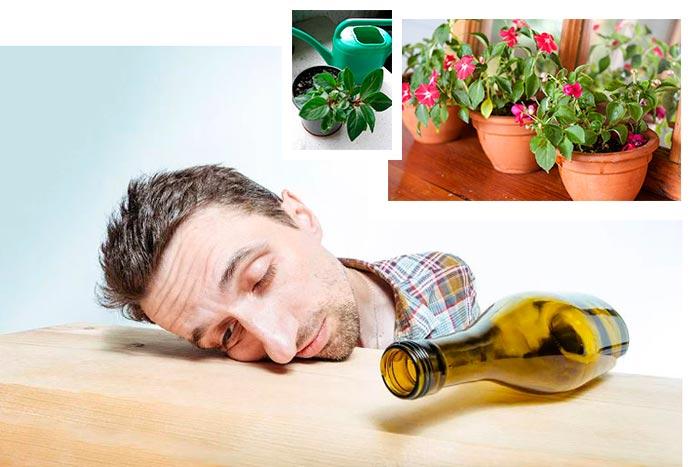 алкоголик и цветы