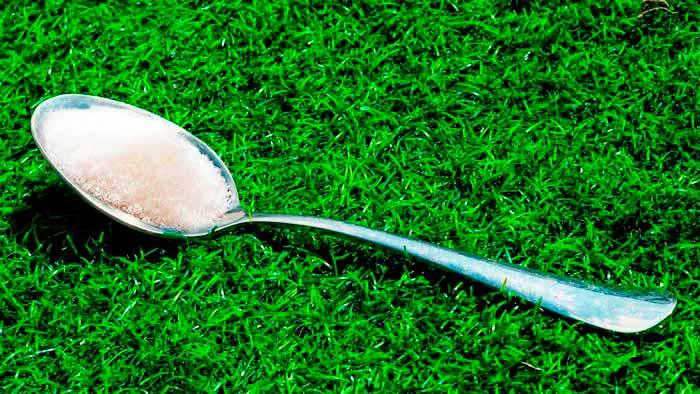 ложка в траве