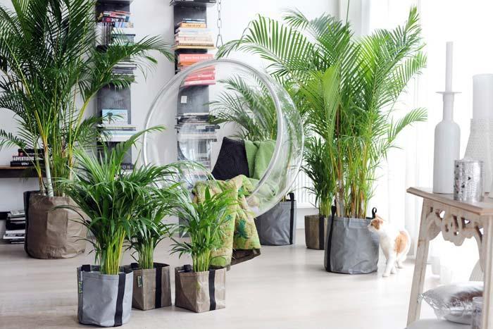 Пальма в фэншуй