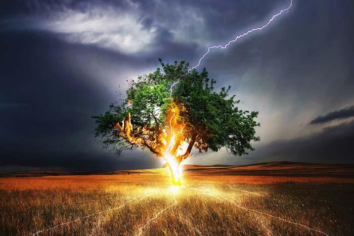 дуб и молния