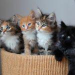 кошки разных цветов в корзинке