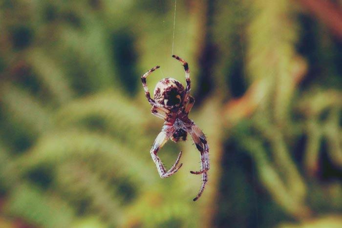 паук спускается