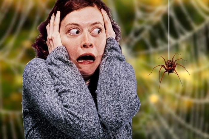 паук перед лицом
