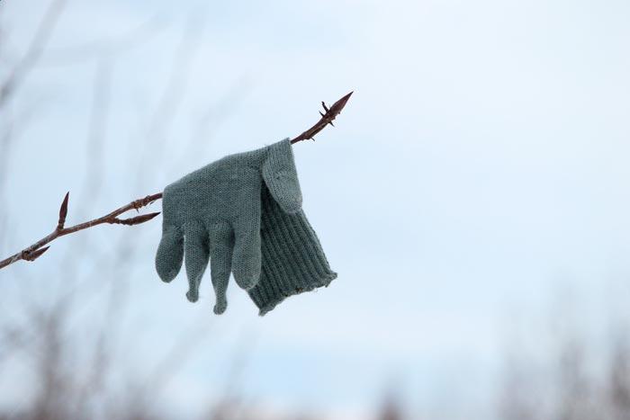 перчатка на дереве