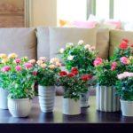 розы в квартире