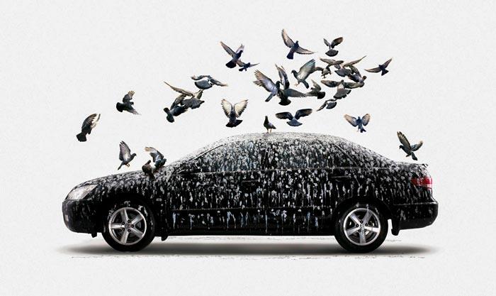 голуби кружат вокруг авто