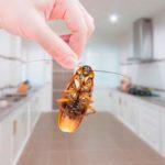 держит таракана в руке