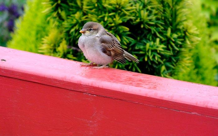 птица на веранде